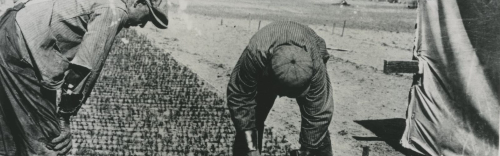 Old photo of two men tending to farm field